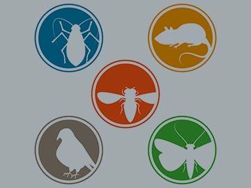 Devis insectes, rats et pigeons